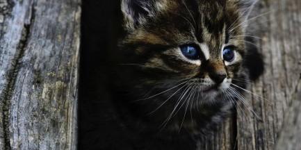 """Apel ratusza na nadchodzącą zimę. """"Pomóżmy kotom, zostawmy im wejścia do piwnic"""""""