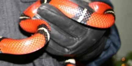 Wąż, który jeździł koleją