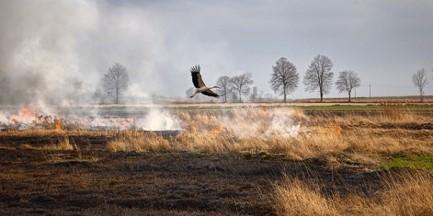 Wypalanie traw skończyło się tragedią. Śmierć 69-latka