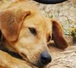 """""""Codziennie dokonywane są zbrodnie na bezbronnych zwierzętach"""". Demonstracja w sobotę"""