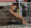 Warszawa miastem bez cyrków ze zwierzętami. Prezydent podpisała zarządzenie