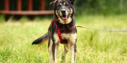 Nie porzucaj przyjaciół przed wakacjami - Dzień Psa na Polu Mokotowskim