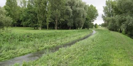W Potoku Służewieckim znaleziono ciało kobiety