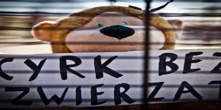 Chcą cyrku bez zwierząt, będą protestować