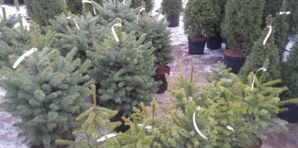 Przynieś elektrośmieci, odbierz drzewko świąteczne!