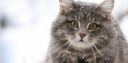 Bez naszej pomocy koty mogą nie przetrwać zimy [APELUJEMY]