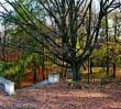 ZOM zasadzi 480 nowych drzew, najwięcej na Pradze Południe