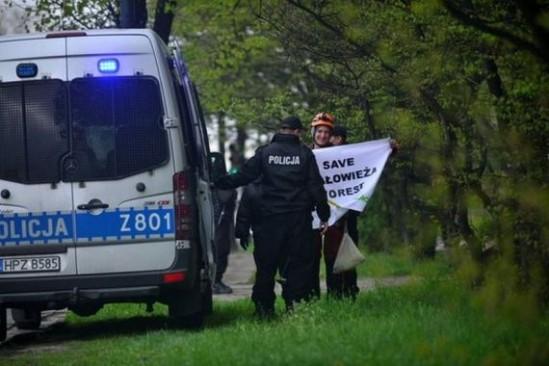W poniedziałek odbyło się posiedzenie Trybunału Sprawiedliwości Unii Europejskiej, na którym poruszano kwestię m.in. kontrowersyjnej wycinki drzew w Puszczy Białowieskiej. Fot. Greenpeace Polska/tt