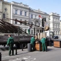Nowe drzewa na Trakcie Królewskim