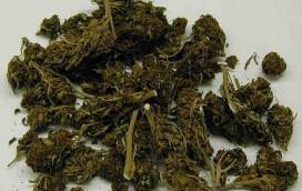 Pół kilograma marihuany na Mokotowie