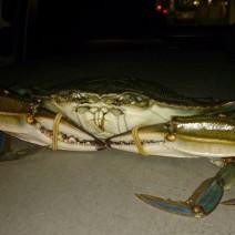 30 wielkich krabów znaleziono na lotnisku!