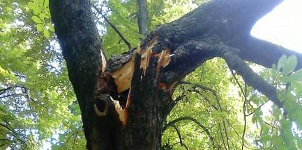 Krajobraz po burzy. Zniszczone drzewa w parkach [ZDJĘCIA]