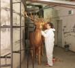 Gadające jelenie na pl. Defilad