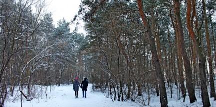 Lasek Bródnowski zimą (fotostory)