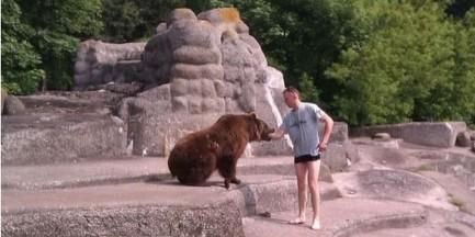 Wtargnął na wybieg dla niedźwiedzi i dostał krwawą nauczkę