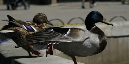 Ptaki zniknęły po rewaloryzacji trzech warszawskich parków