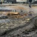 Pozostałości drzew przy Nowogrodzkiej. Fot. MJN
