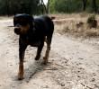 """""""Psy robią wszędzie. Od zawsze"""""""