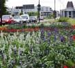 1,4 mln roślin przybyło w 2014 roku w Warszawie [ZDJĘCIA]