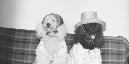 Psy obchodzą dziś swoje święto! Wyjątkowe zdjęcia zwierzaków z dawnej Warszawy
