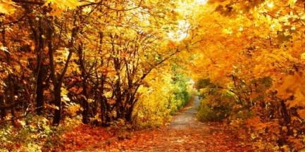 Za darmo: Jesień w ogrodzie – warsztaty kompostowania