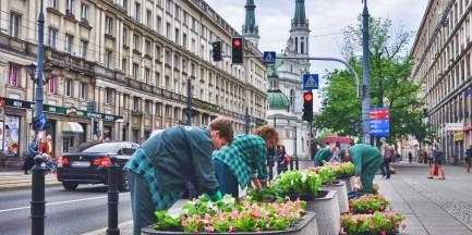 Cała Warszawa w kwiatach!