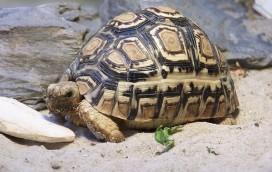 Ukradła żółwia!