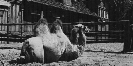 Warszawskie zoo kończy 87 lat